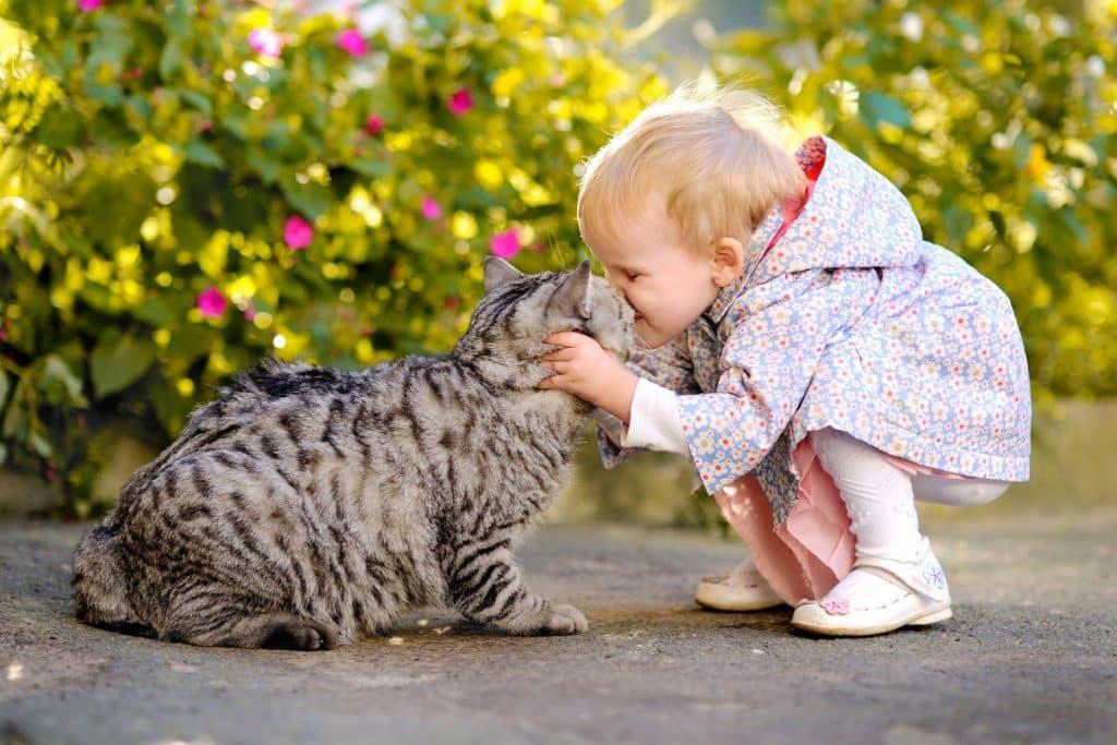gato y niño jugando