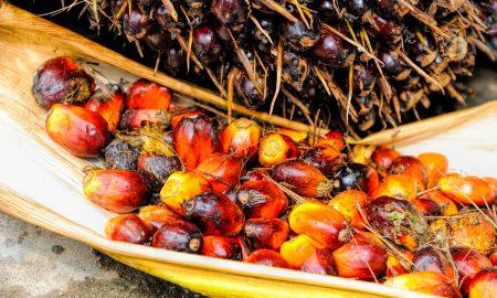 el fruto de la palma