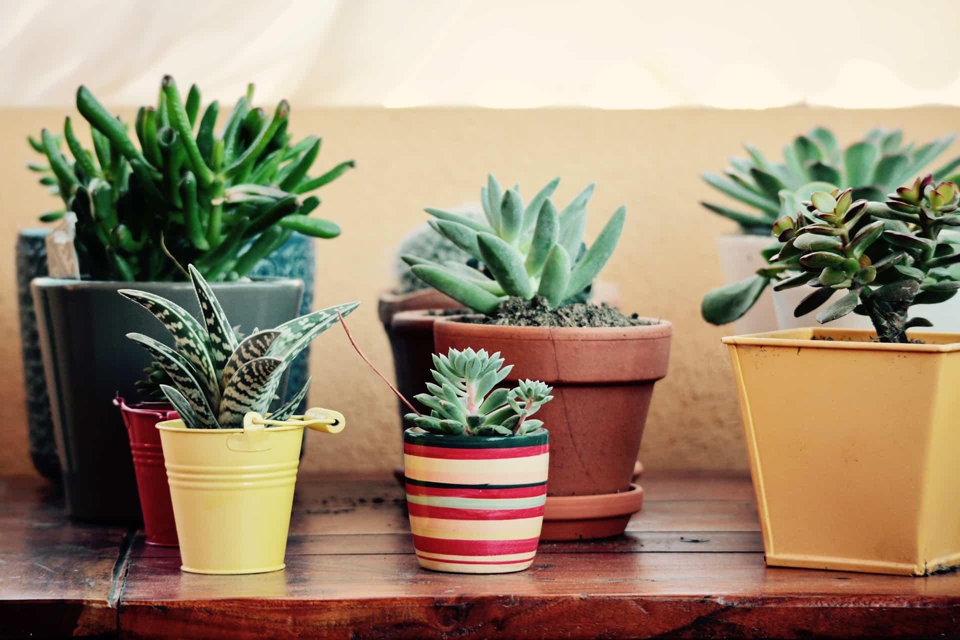Plantas en decoración para el verano