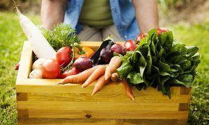 ¿Realmente son mejores los productos orgánicos que los normales?