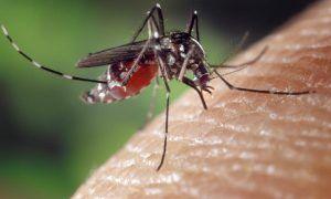 Repelente de mosquitos ¿Cuáles son los mejores métodos para evitarlos?