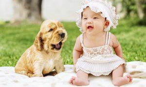 Conseguir que una mascota no sienta celos de un bebé