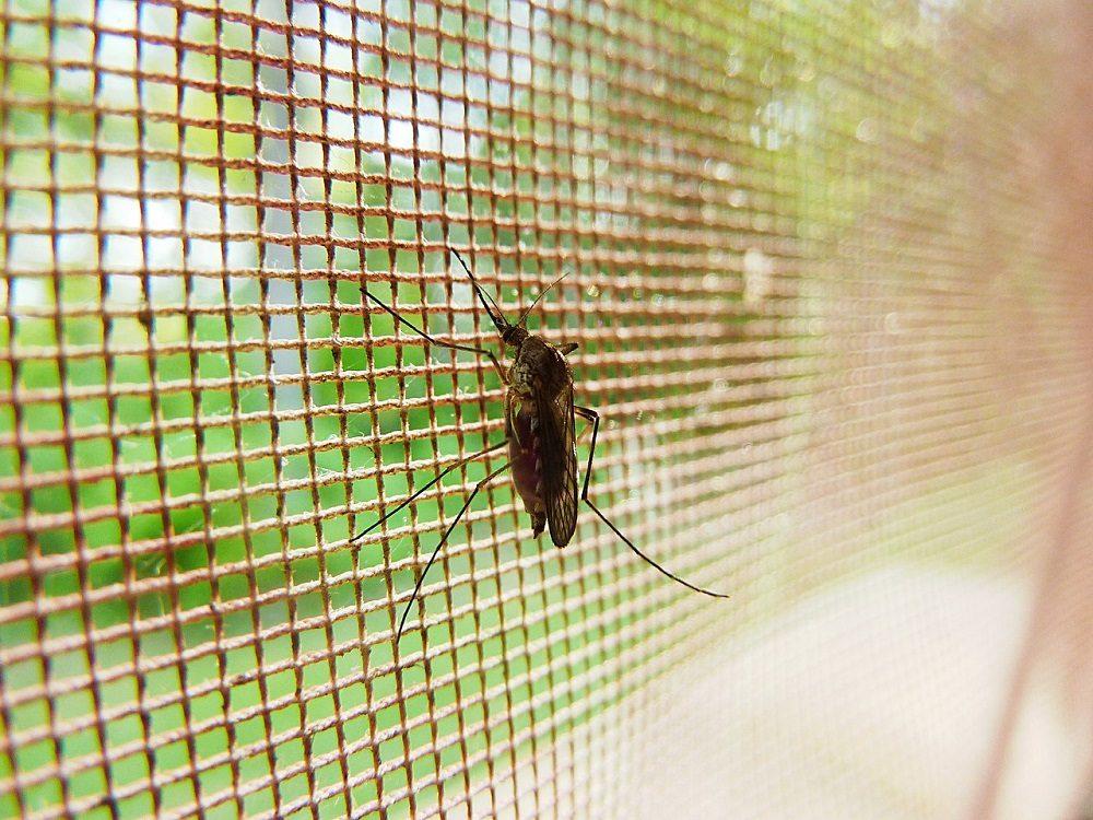 La mosquitera es una barrera contra insectos