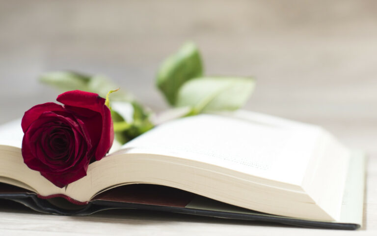 rosas de sant jordi